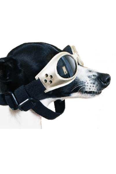 DAN DA DAN DOG (LE MARDI OU MORTY EST MORT)