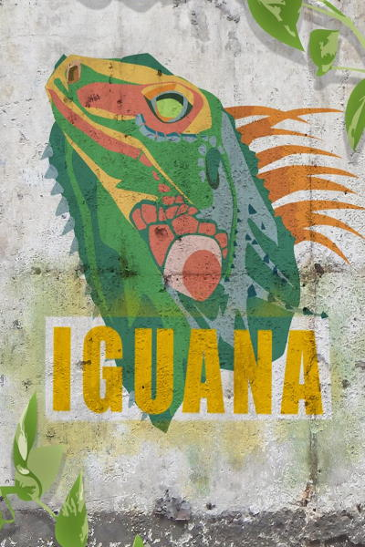 concert Iguana