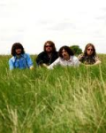 THE SHEEPDOGS