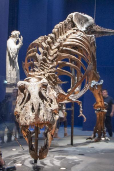 EVENEMENT / Au Museum national d'Histoire Naturelle, venez admirer un T-Rex !